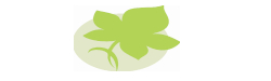 Ivy Leaf Care Limited